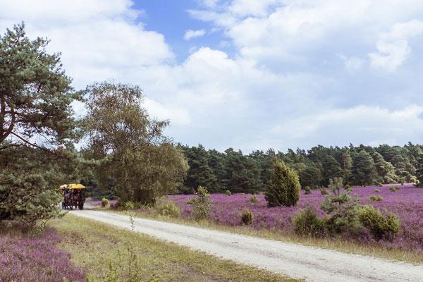 Winser Heide-Spezial